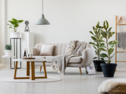 Decluttered and simple Living Room with couch and plants